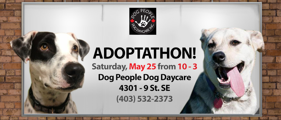 Weekend Adoption Events Calgary, Alberta